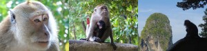 DSC00204 opt 300x75 Yoga, Meditation, and Monkey Thievery