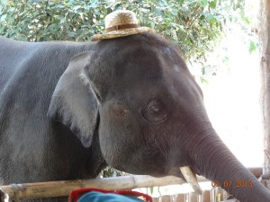 boon opt 300x225 Mahout training in northern Thailand