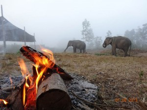 fire2 opt 300x225 Mahout training in northern Thailand