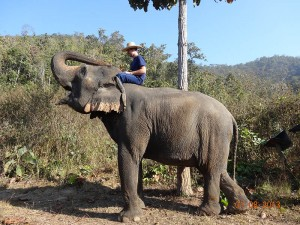trek opt 300x225 Mahout training in northern Thailand